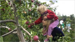 SLO Creek Farms - CERTIFIED ORGANIC, apples,